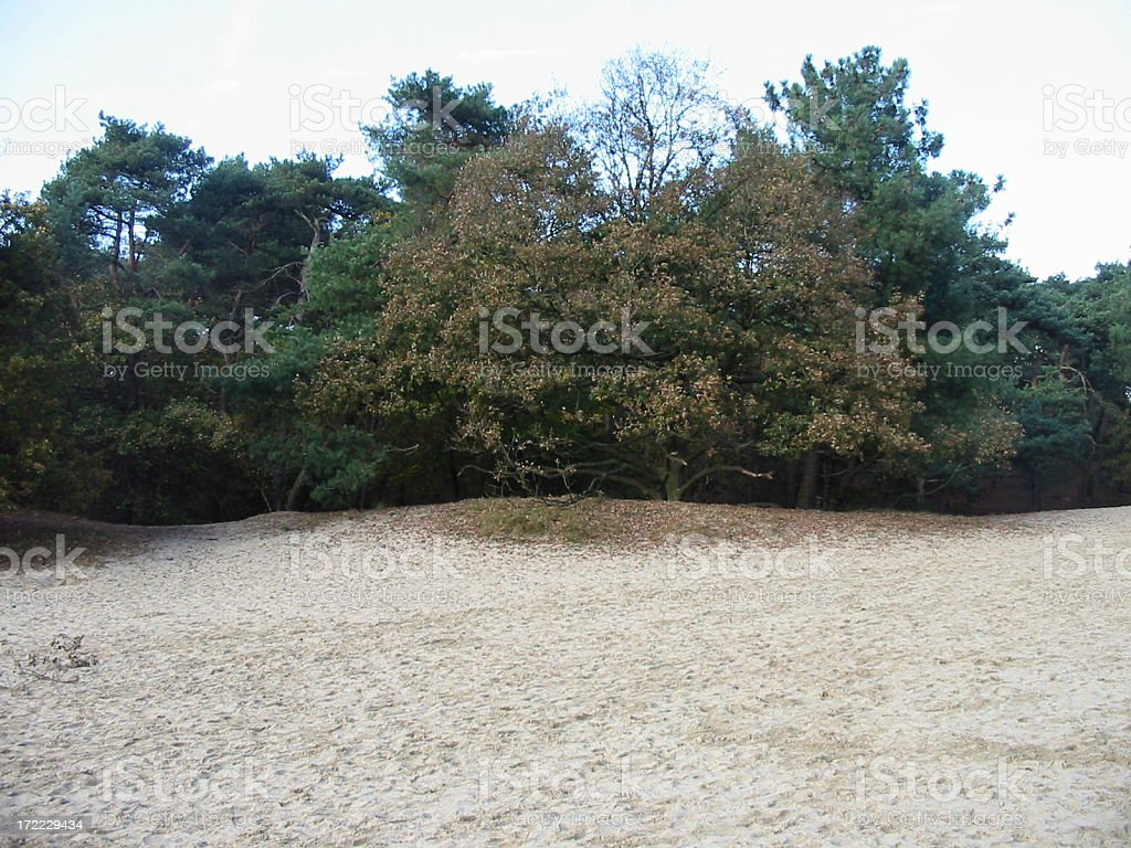 Forest with sand dunes royalty-free stock photo