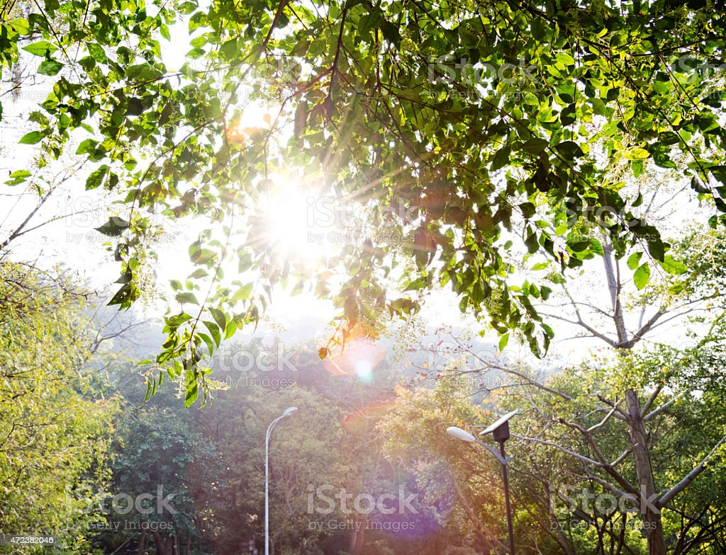 forest with sunlight stock photo