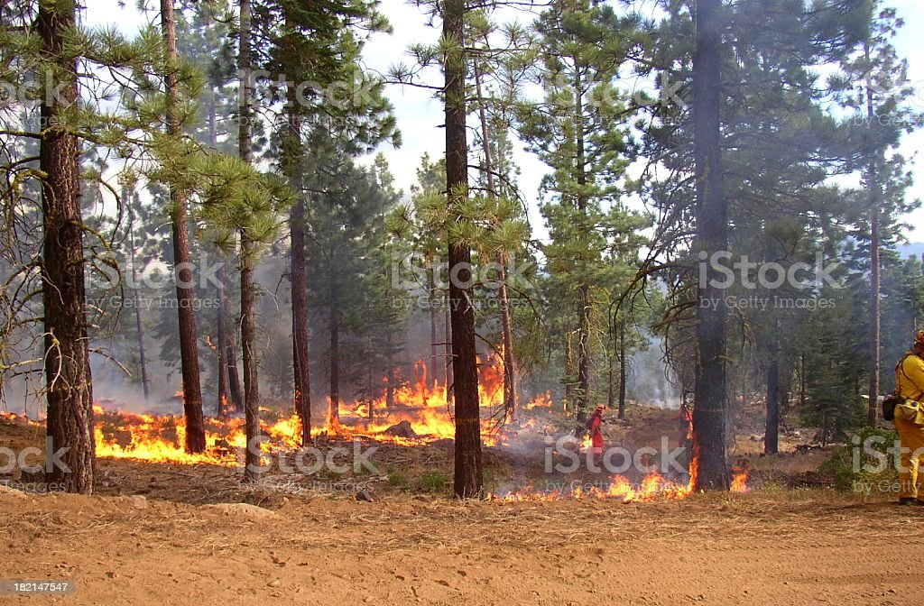 A forest with the blazing fire stock photo