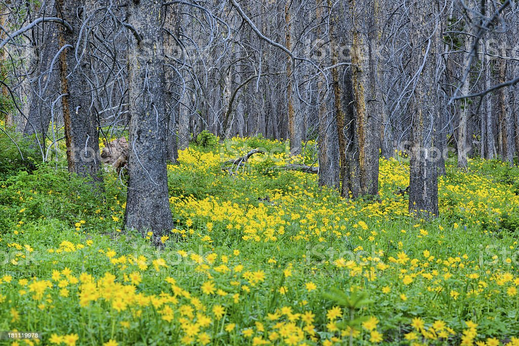 Forest with Yellow Wildflowers royalty-free stock photo