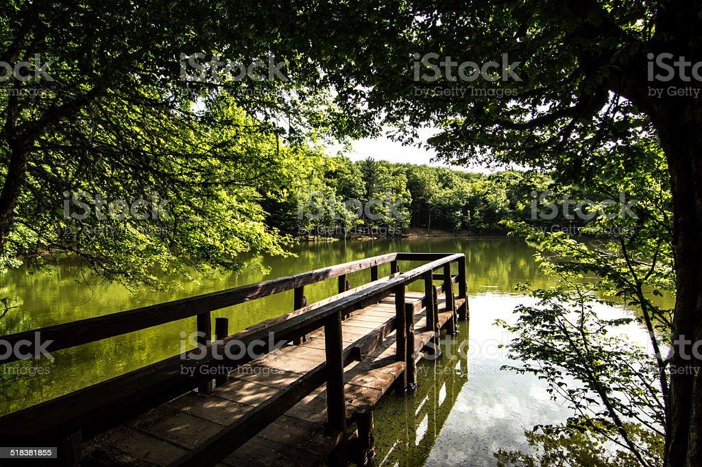 Foresta Umbra - Puglia stock photo