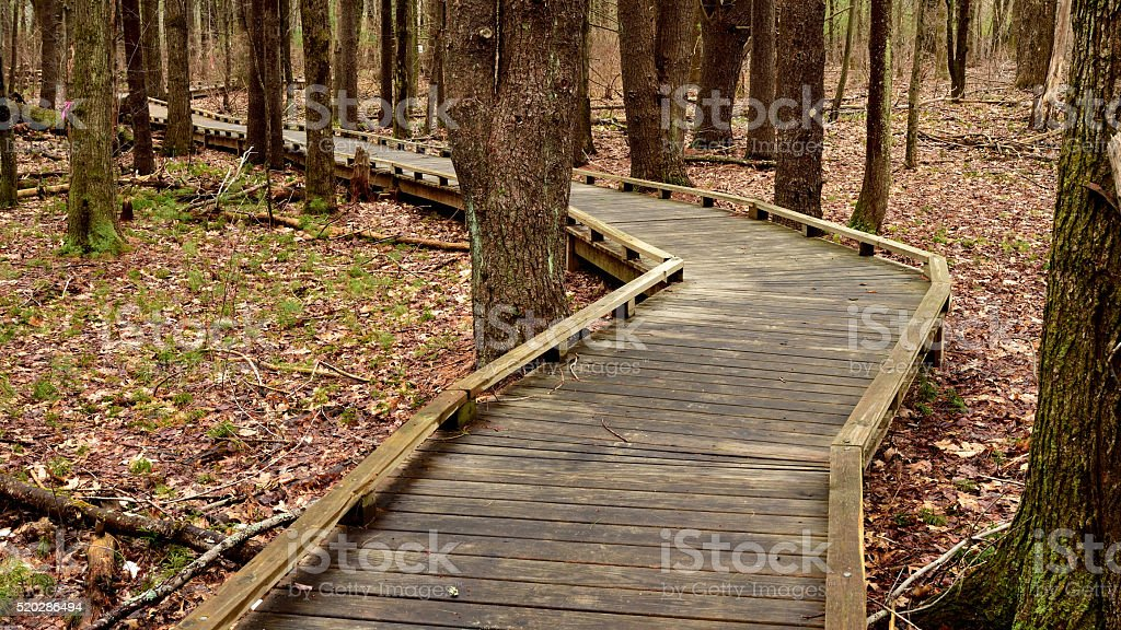 Forested Handicapped Accessible Hike stock photo