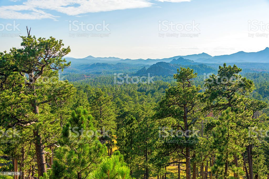 Forested Landscape in South Dakota stock photo