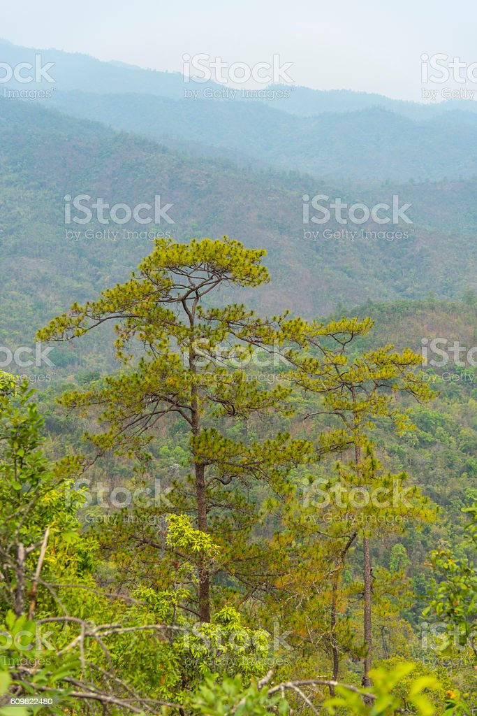 Forested mountain slope in low lying cloud in mist stock photo