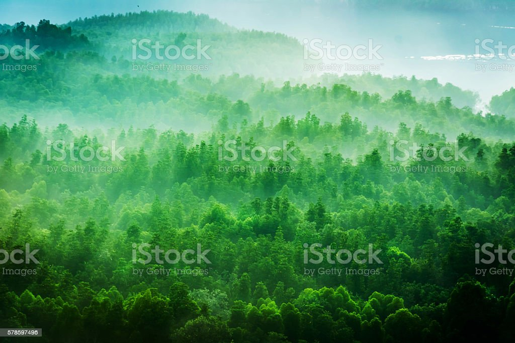 Forested mountain slope in low lying cloud stock photo