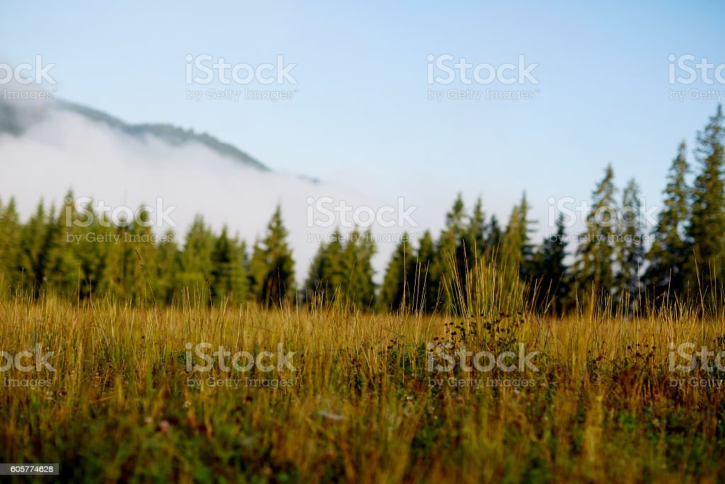 Forested mountain slope in low lying cloud with the evergreen stock photo