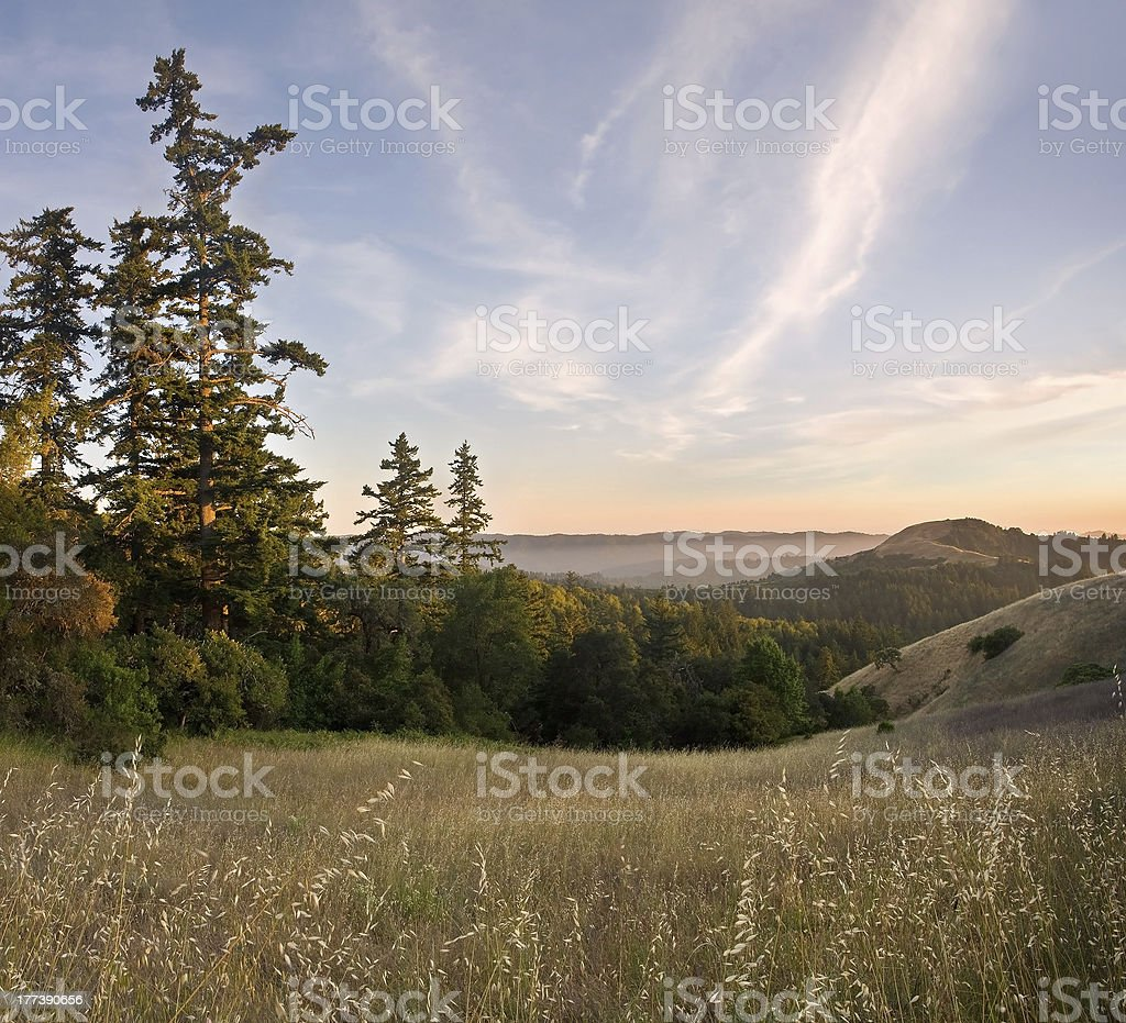 Forested Mountain Sunset in Summer royalty-free stock photo