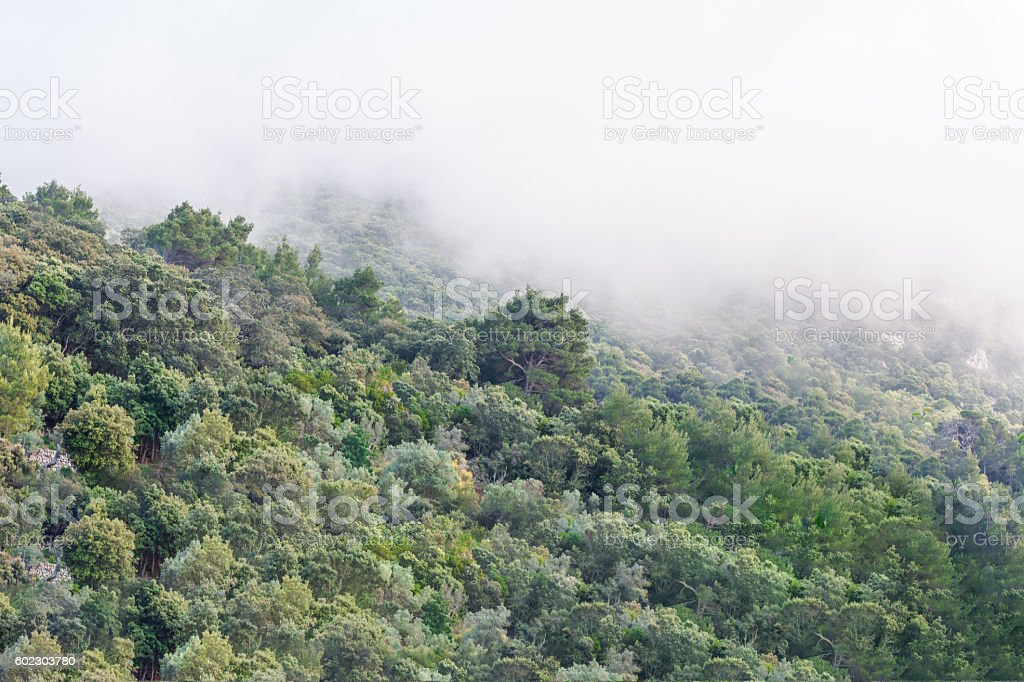 Forested mountainside in fog stock photo