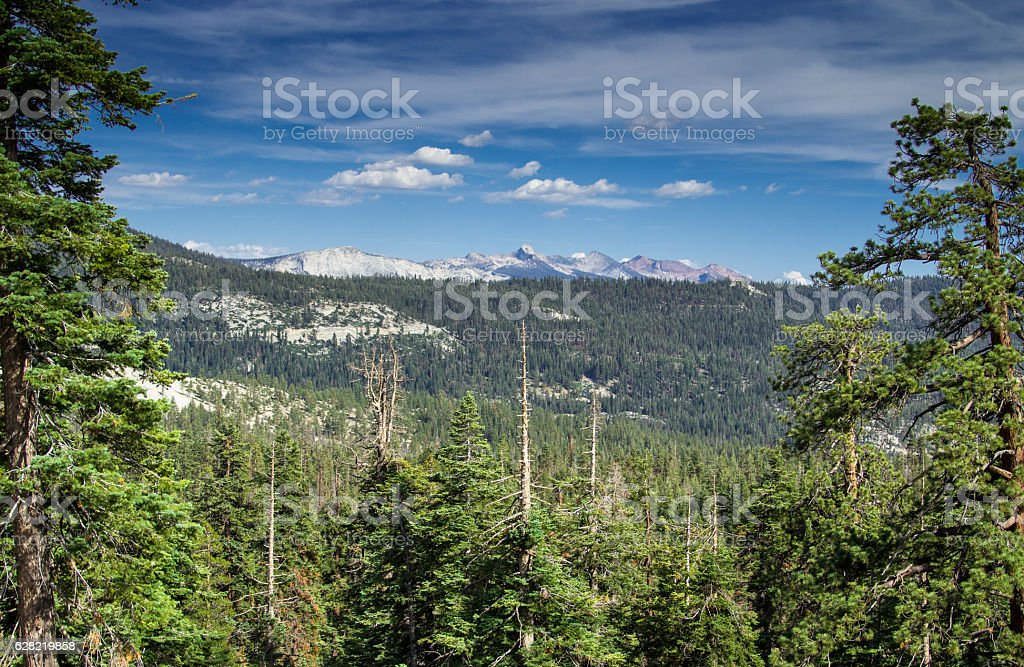 Forested Valley in Yosemite National Park stock photo