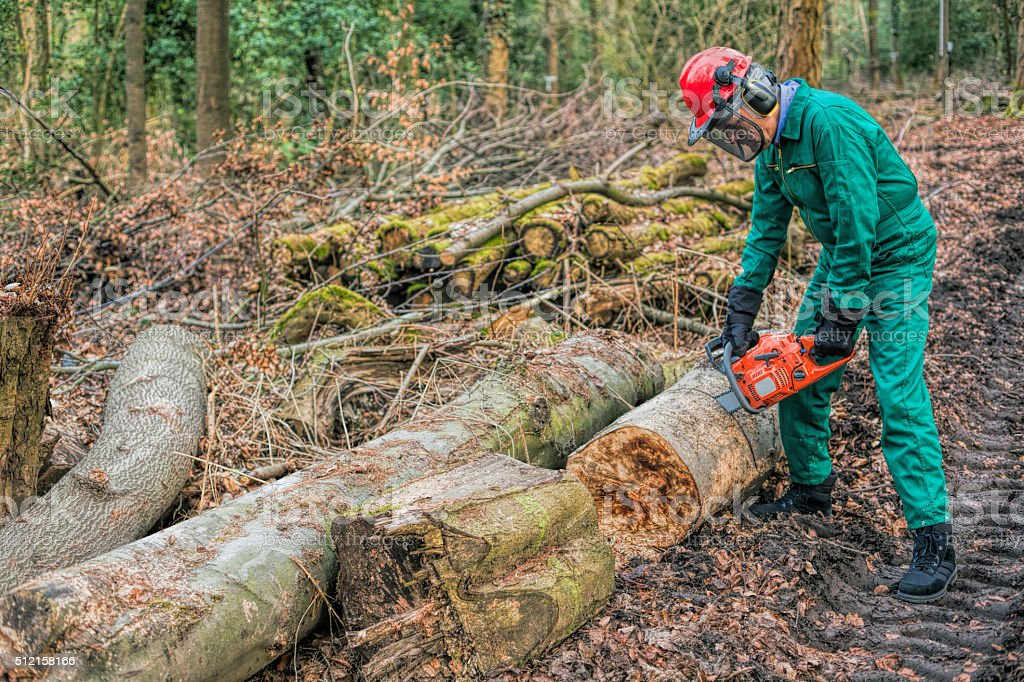 Forester working with chainsaw in forest stock photo