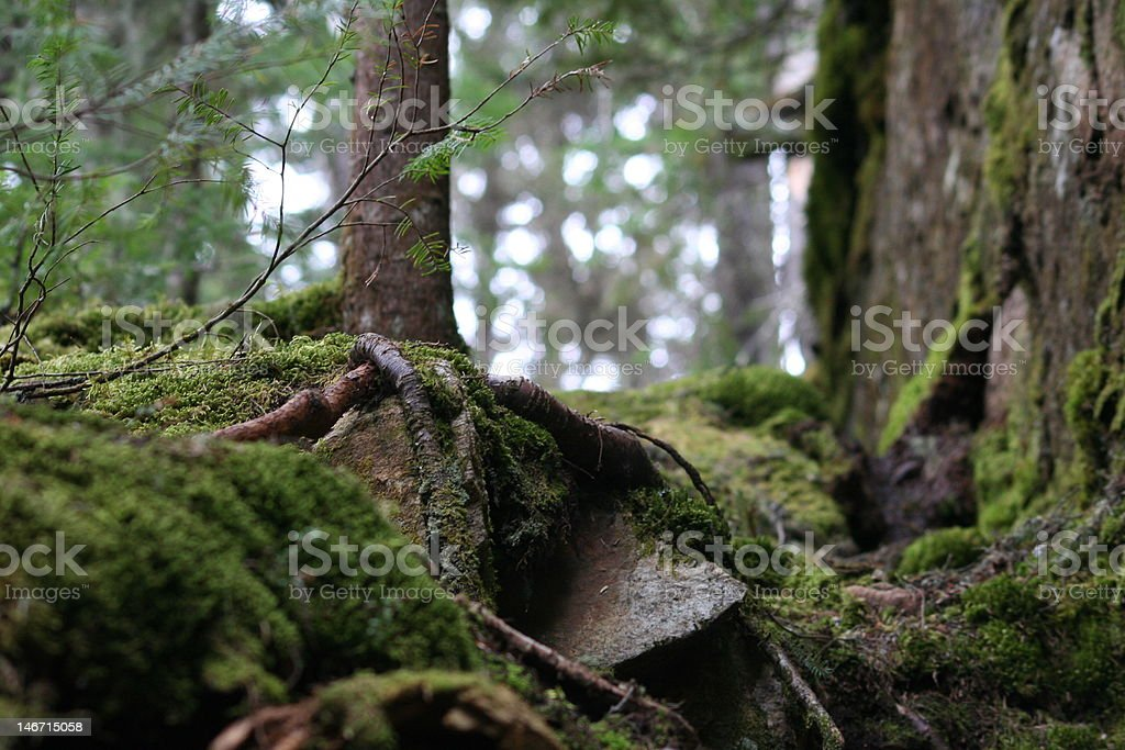 forest.jpg stock photo