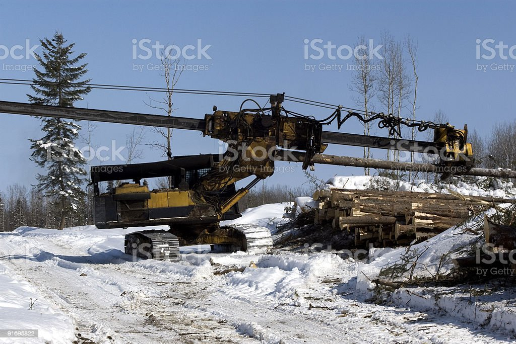Forestry equipment delimbing spruce on cut block stock photo