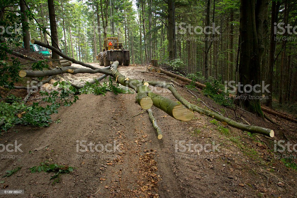 Forestry machinery trailing tree - Hauling wood stock photo