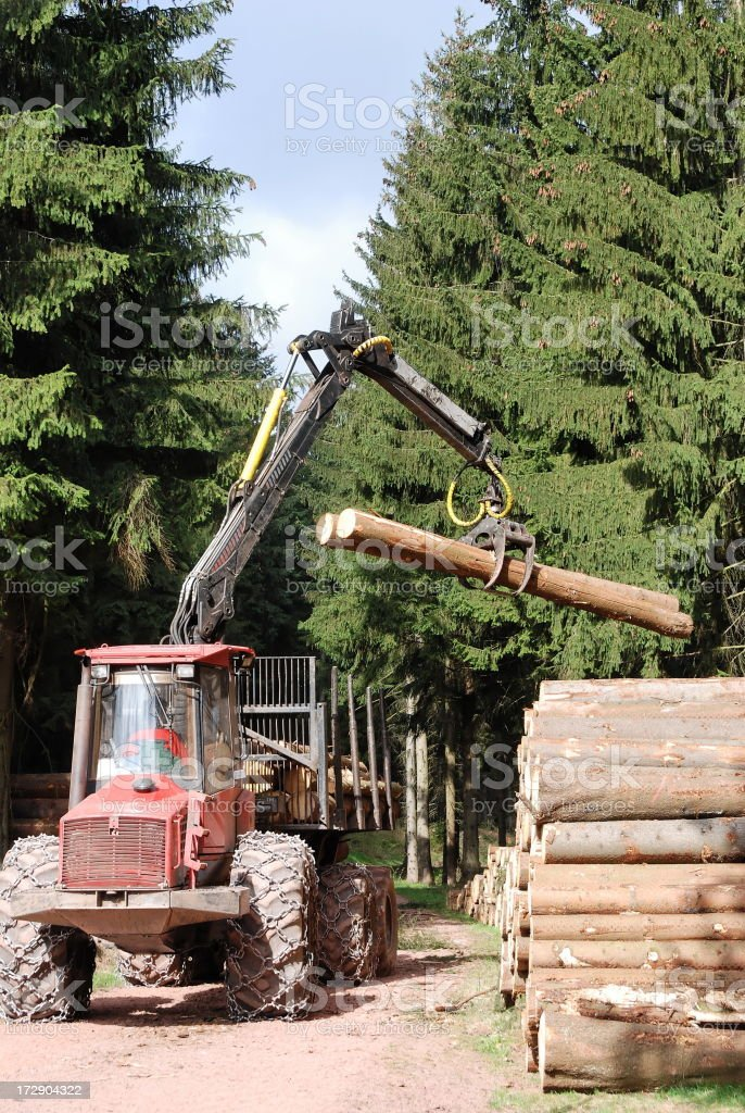 Forestry royalty-free stock photo