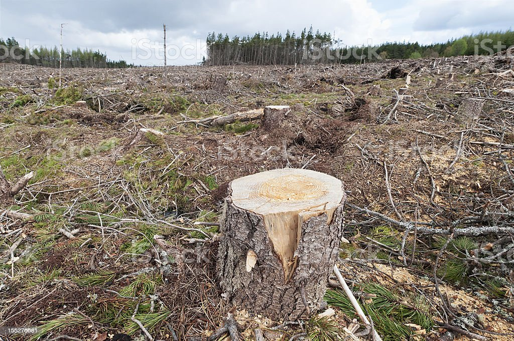Forestry Scene stock photo