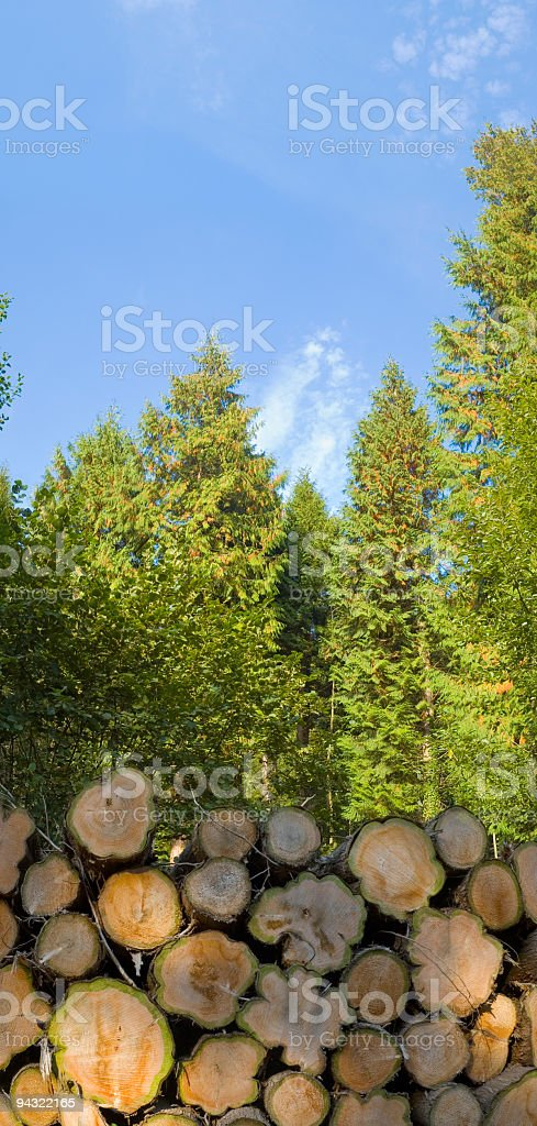 Forestry timber royalty-free stock photo