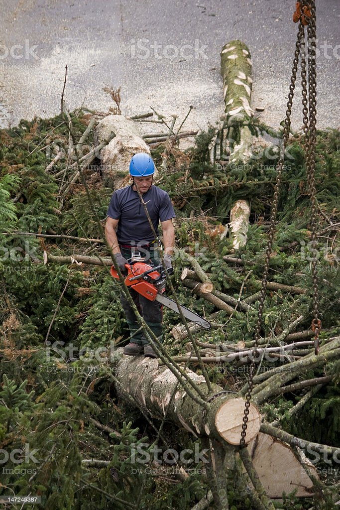 Forestry worker stock photo