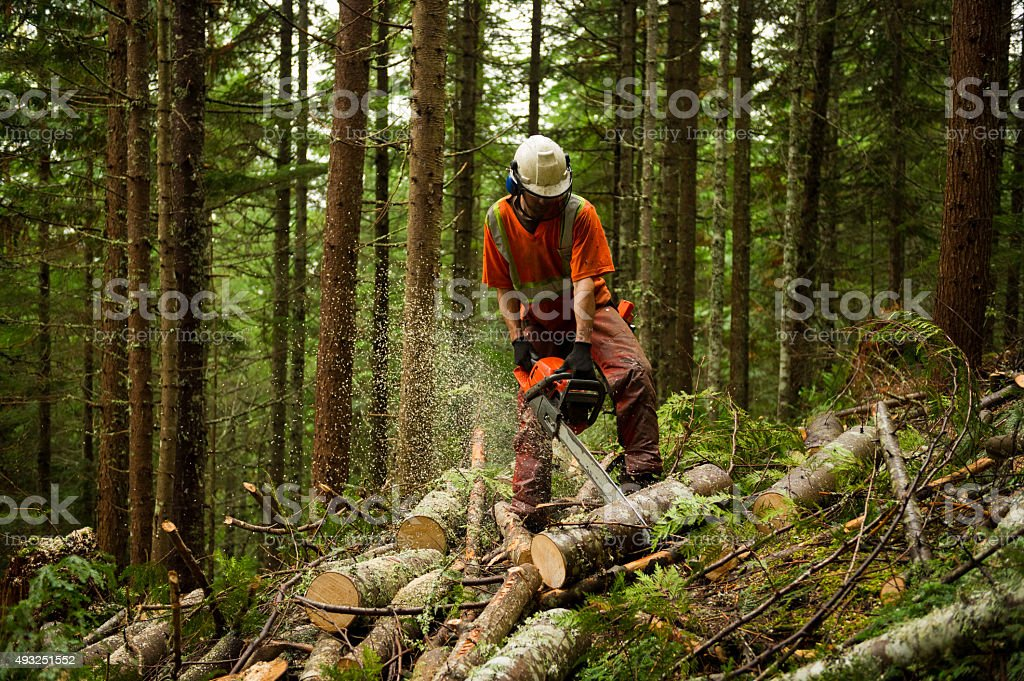 Forestry worker thinning a forest to prevent large forest fires stock photo