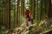 Forestry worker thinning a forest to prevent large forest fires