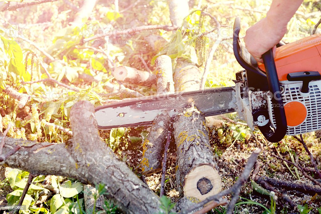 Forestry worker with chainsaw stock photo
