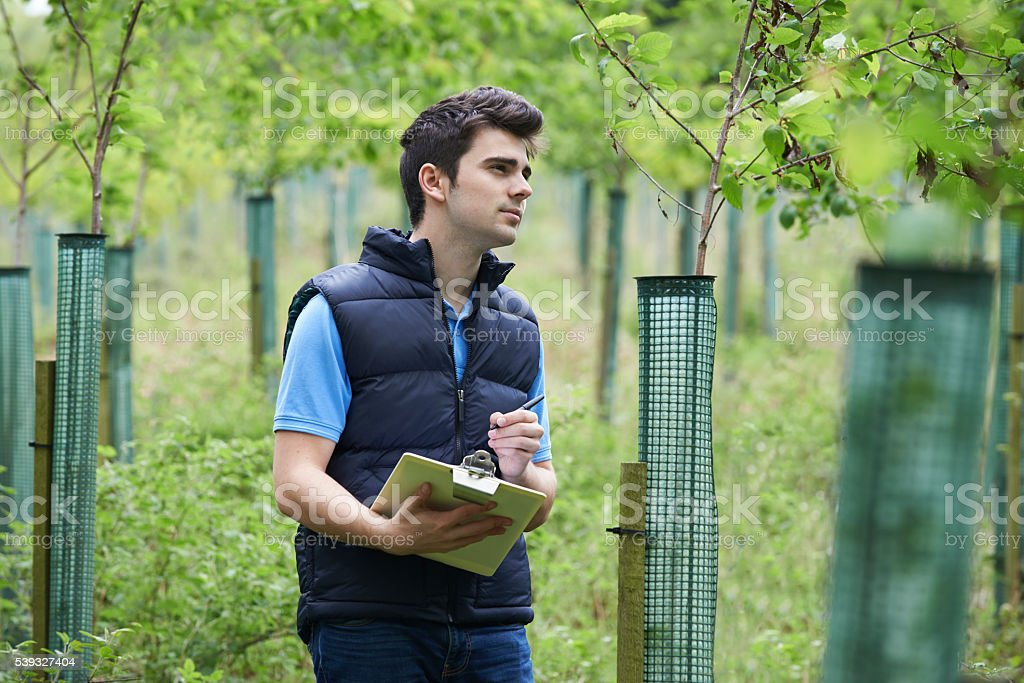 Forestry Worker With Clipboard Checking Young Trees stock photo