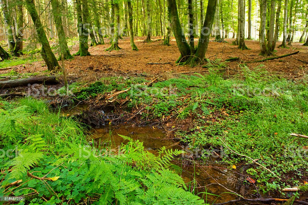 Forests creek in summer. stock photo