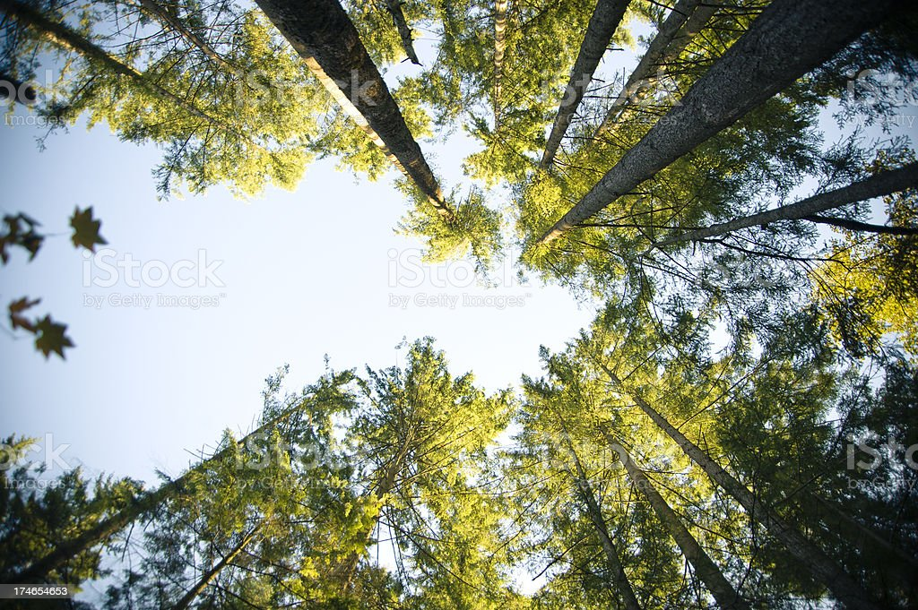 Forests Forever stock photo