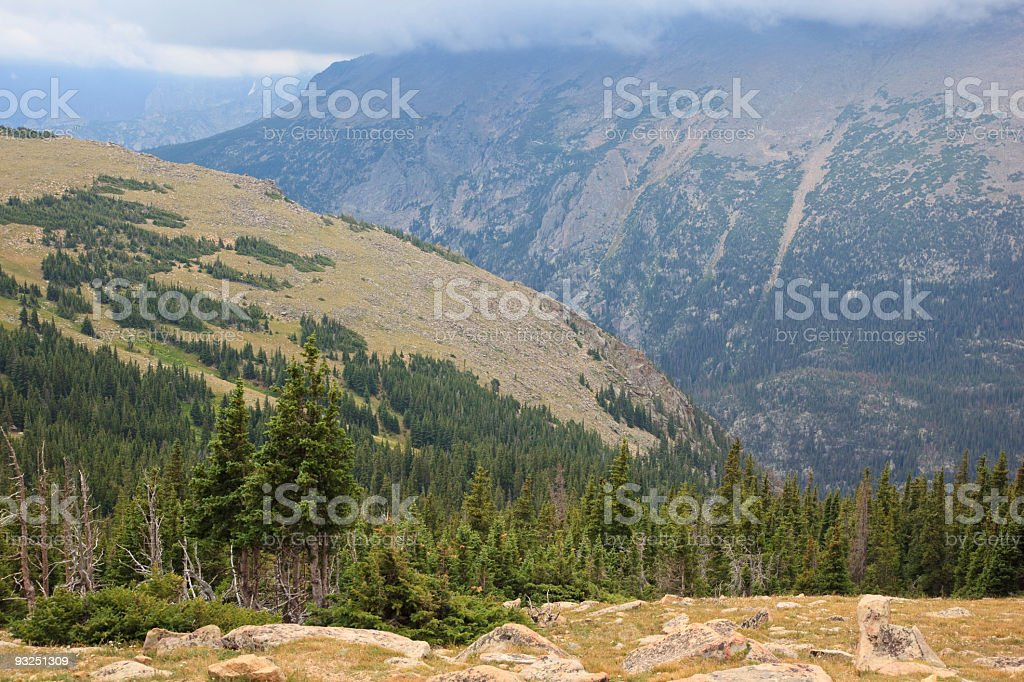 forests in high mountain stock photo