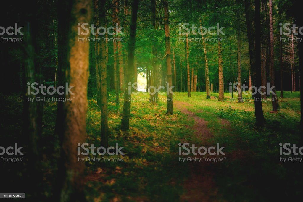 Forests that fairytales are made of stock photo