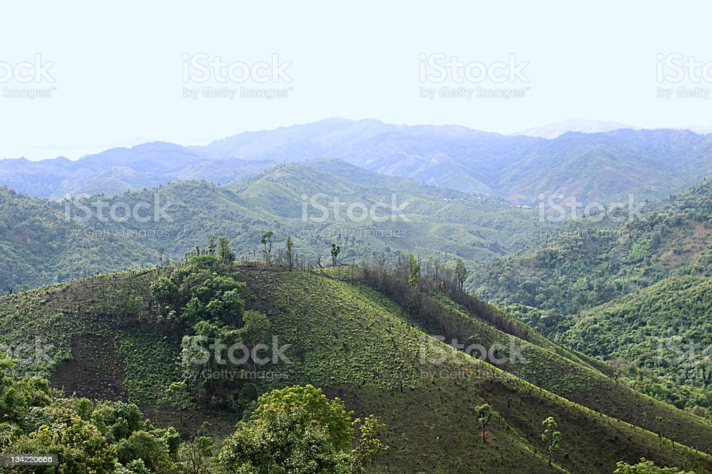 Forests were overthrown stock photo