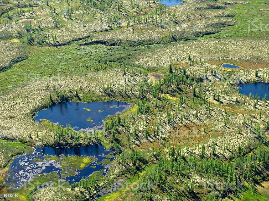 Forest-tundra landscape royalty-free stock photo
