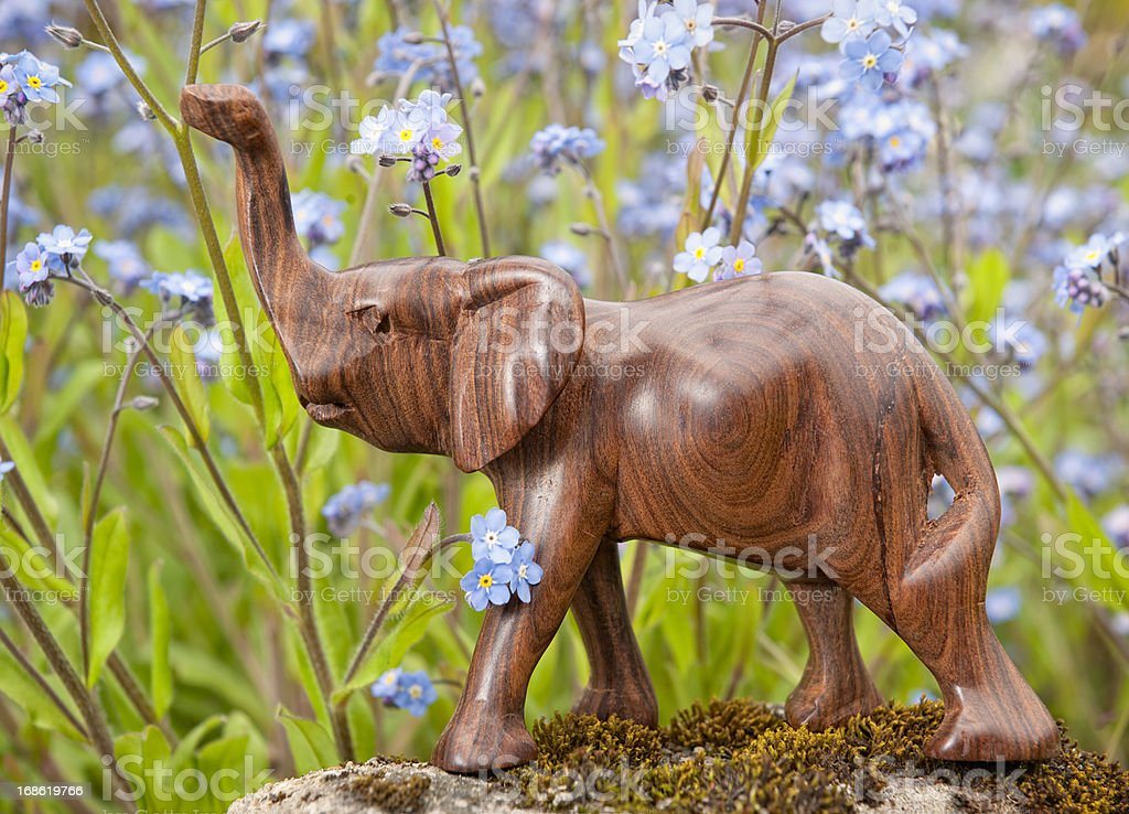 Forget Me Not Elephant stock photo
