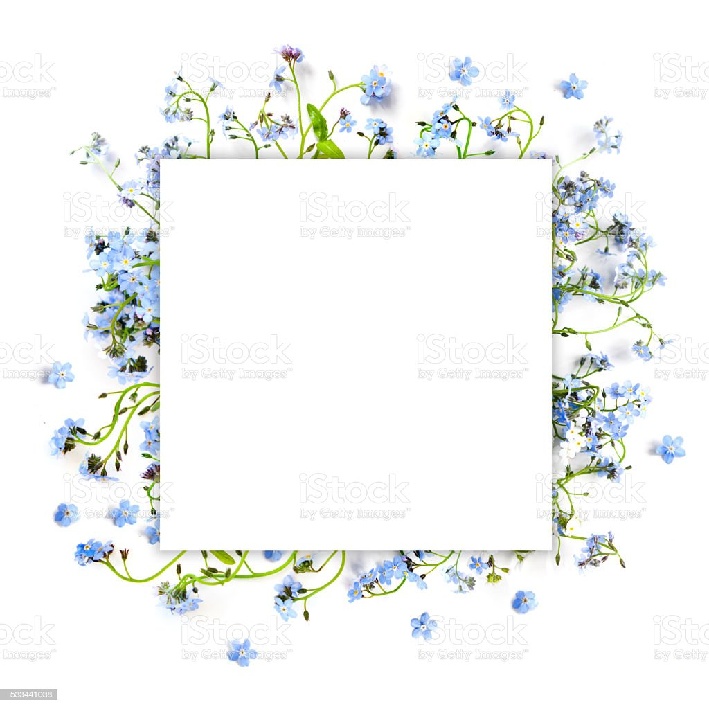 Forget-me-not blue forest flowers - nature square background stock photo