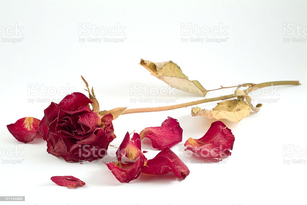Forgotten love stock photo