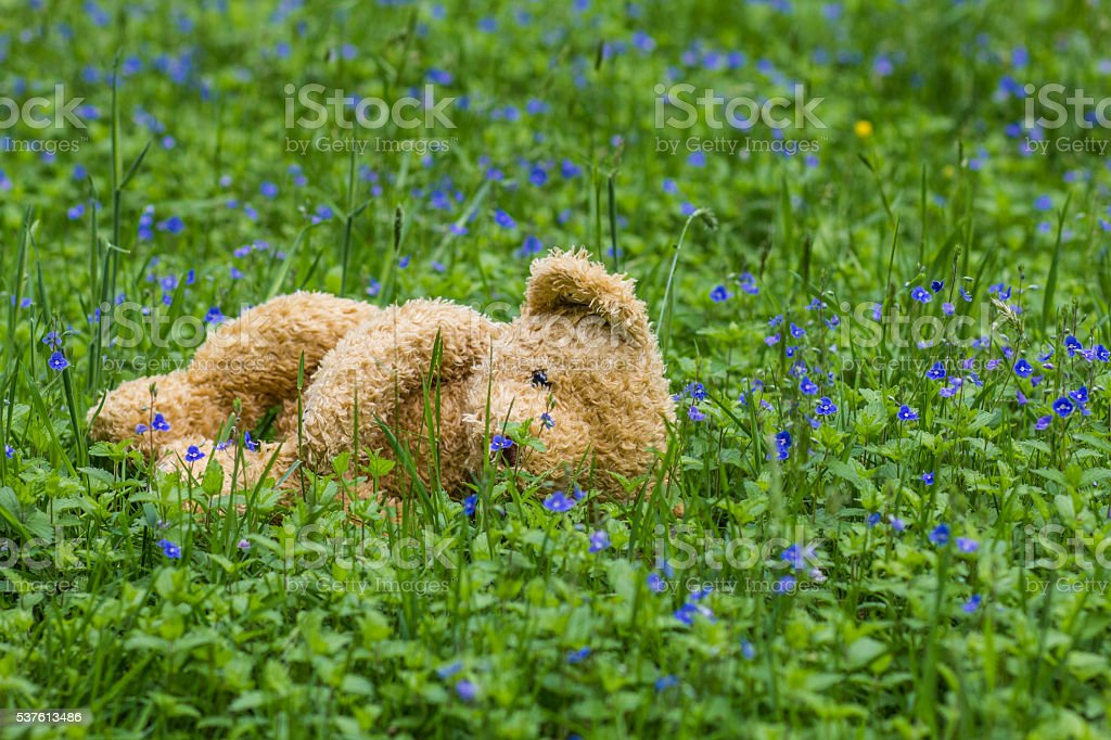 Forgotten teddy bear in the forest stock photo