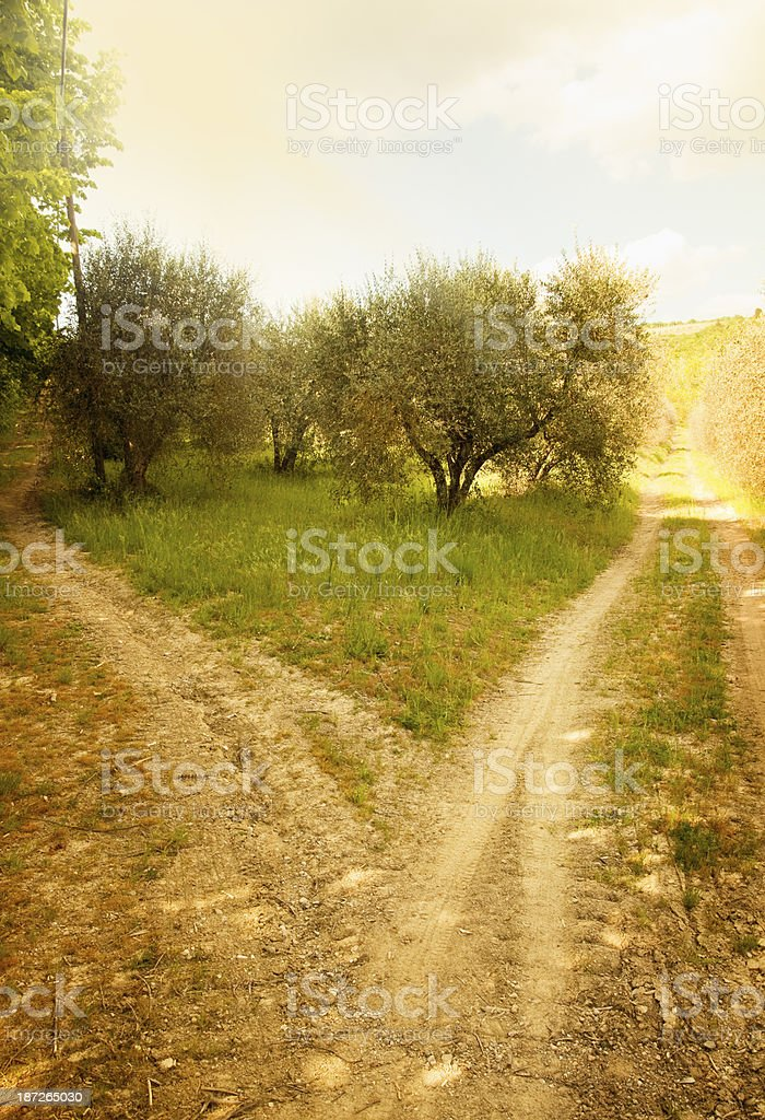 Fork in the Road royalty-free stock photo