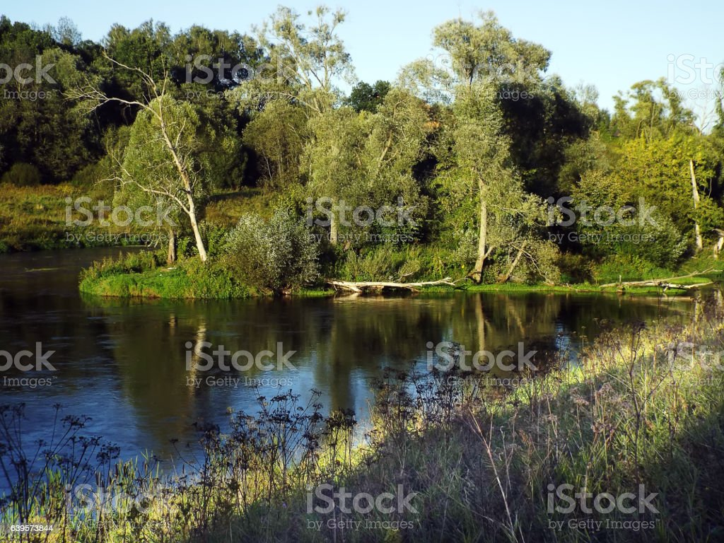 fork of river with green trees on banks relaxing landscape stock photo