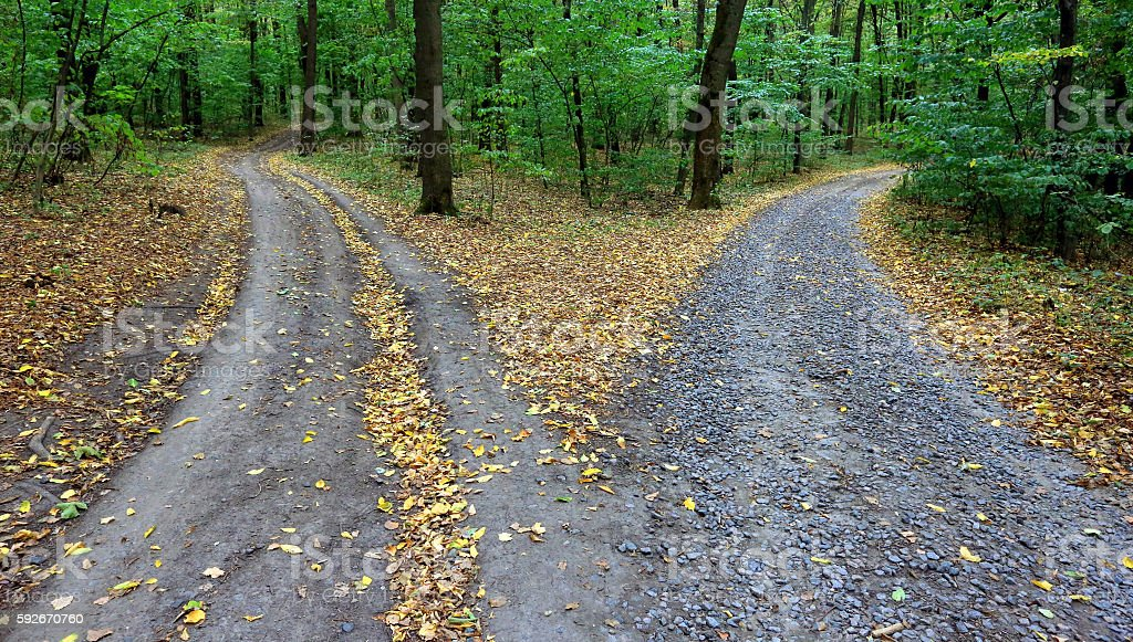 fork rural roads in forest stock photo