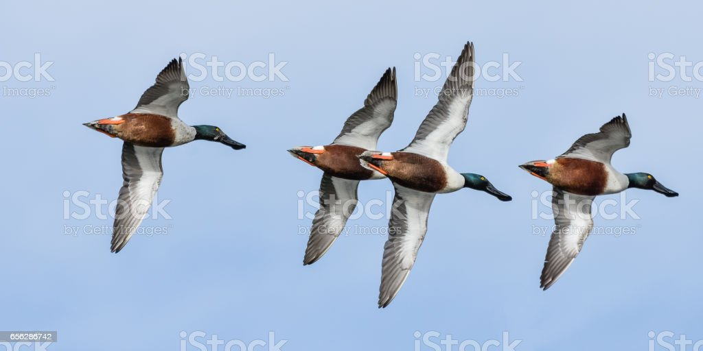 Formation Flying stock photo