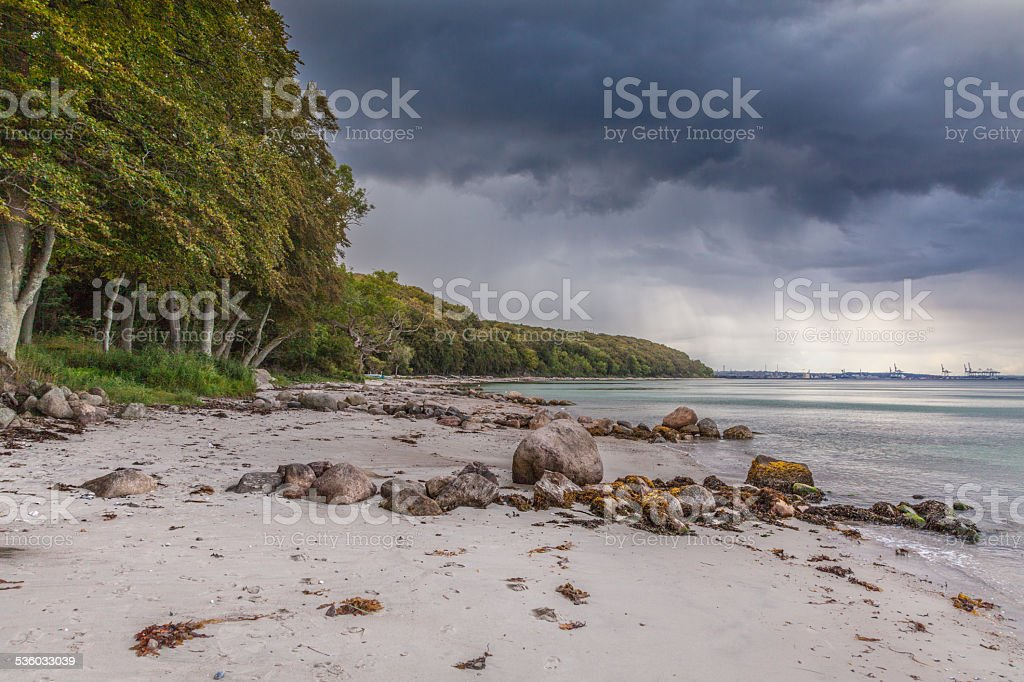 Forrest and beach stock photo