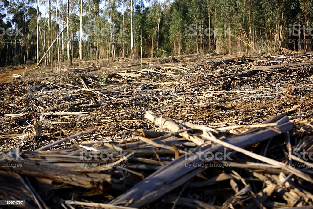 Forrest Destruction royalty-free stock photo