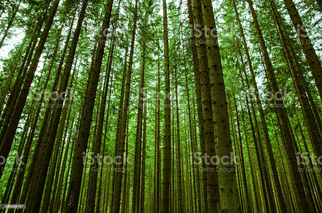 forrest stock photo