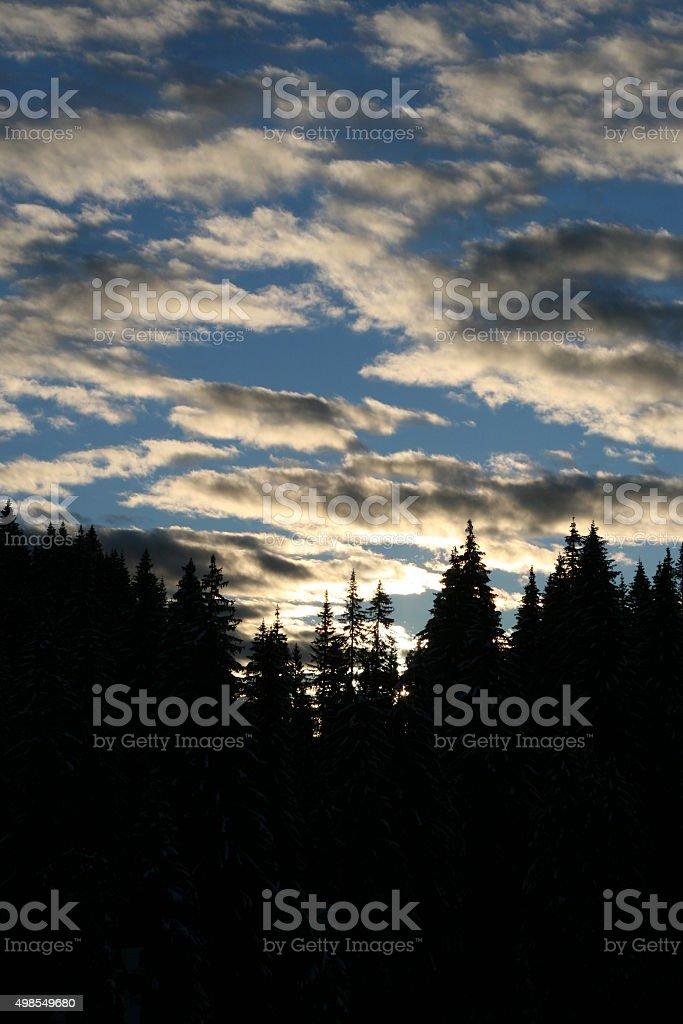 forrest sunrise stock photo