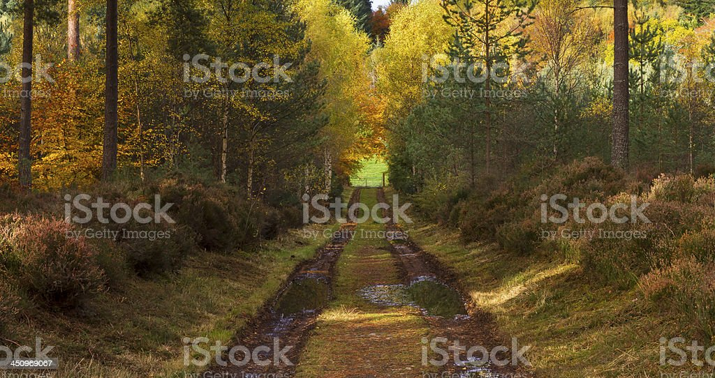 Forrest track in Autumn. stock photo