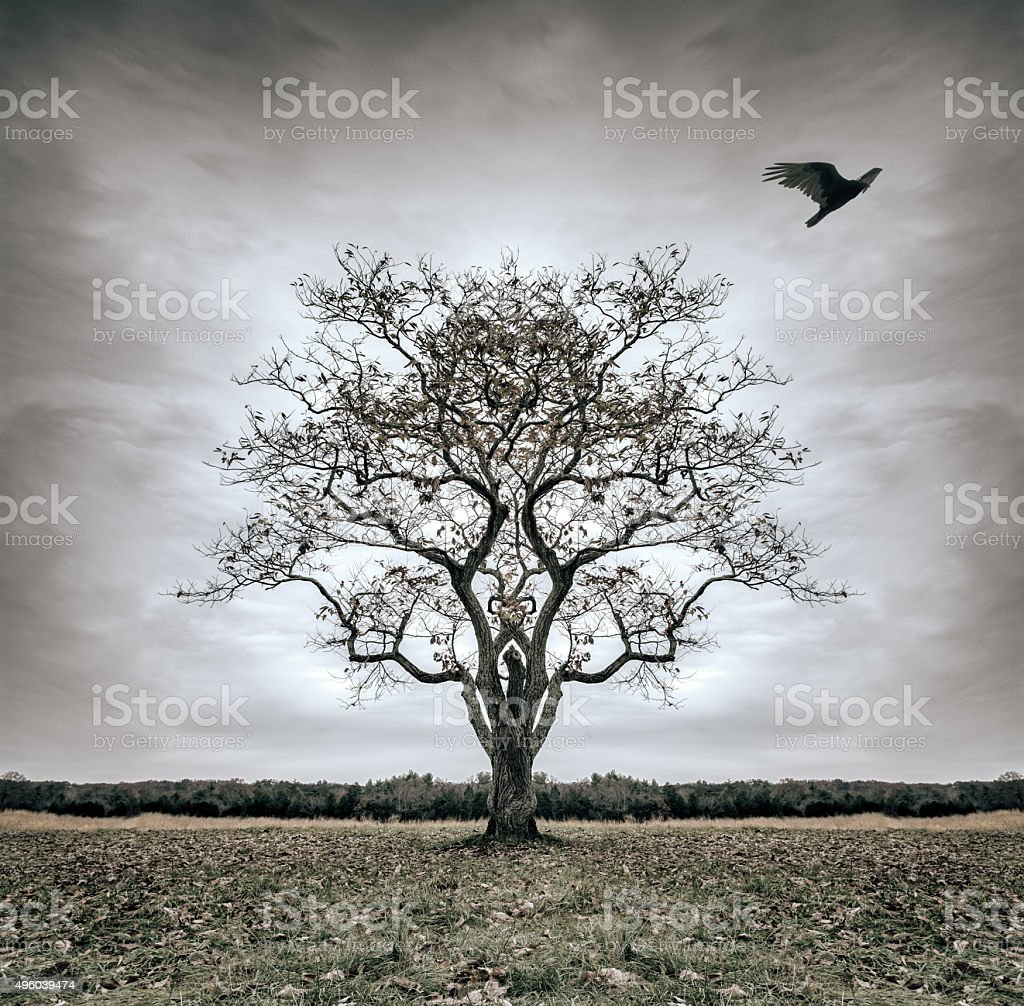 Forsaken Tree of Desolatation stock photo