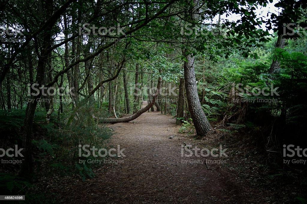 Forêt de Paimpont en Brocéliande stock photo