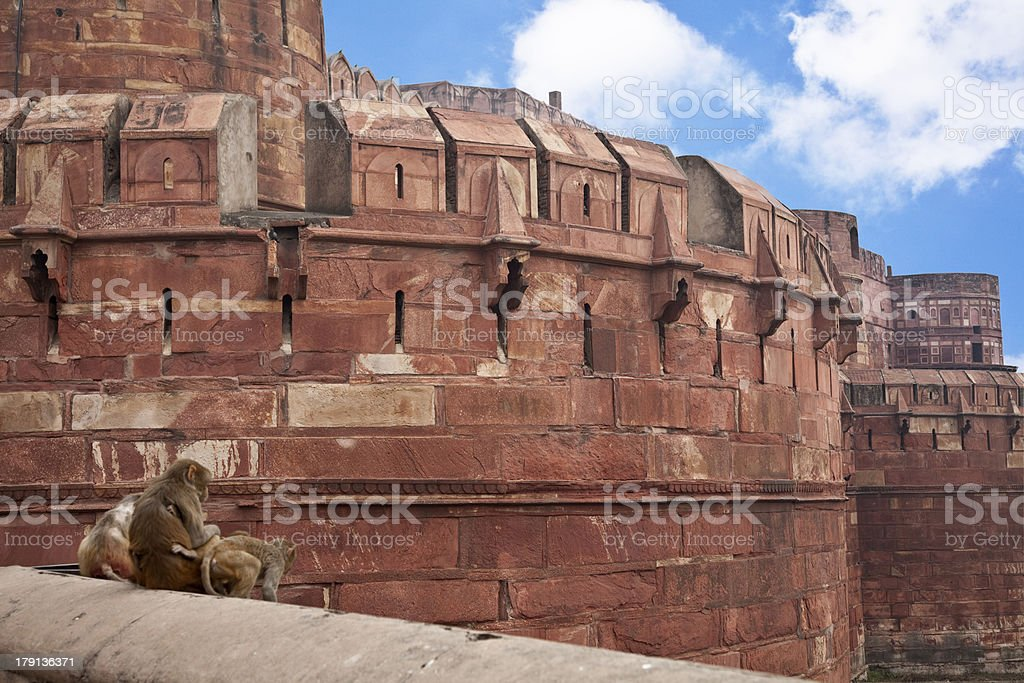 fort in india, Agra royalty-free stock photo