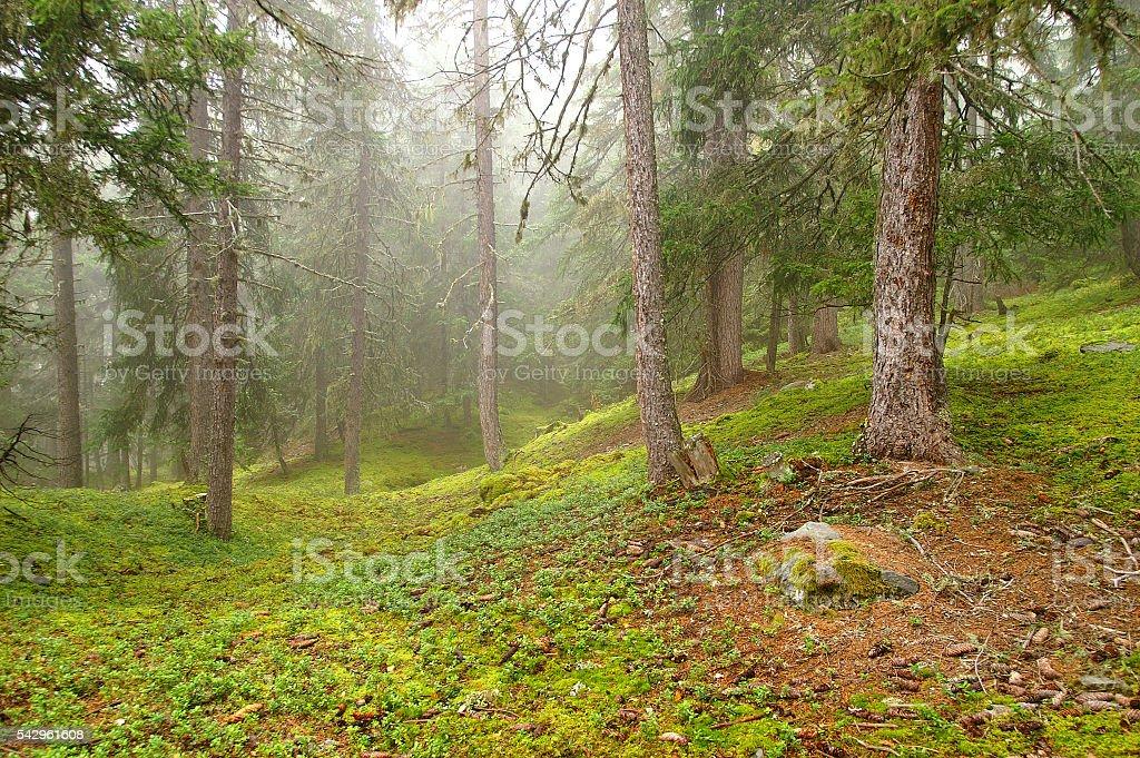 Forêt montagnarde stock photo