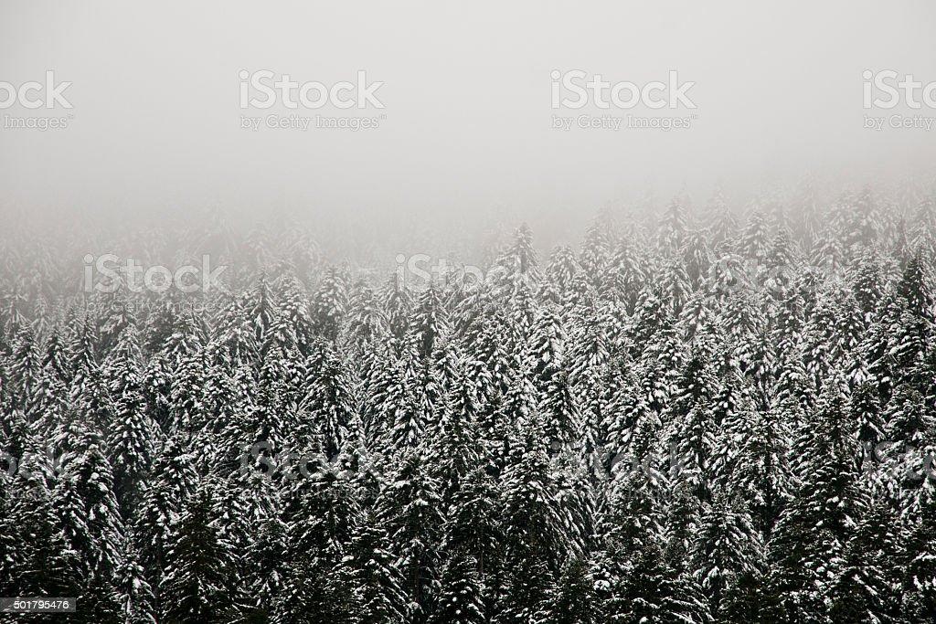 Forêt sous la neige stock photo