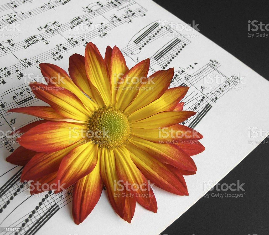 Fortissimo Flower stock photo